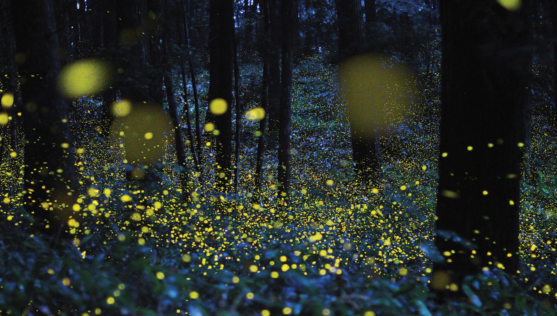 fireflies in forest at night