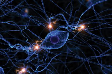 synapses stock image