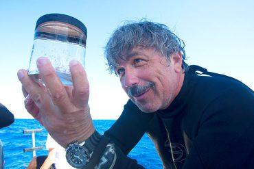 diver looking at sea specimen