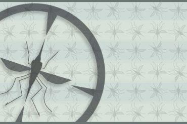 mosquitos graphic