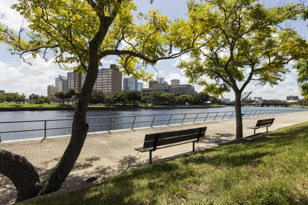 Urban forestry in Tampa Bay, Florida.