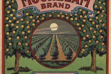 citrus crate logo