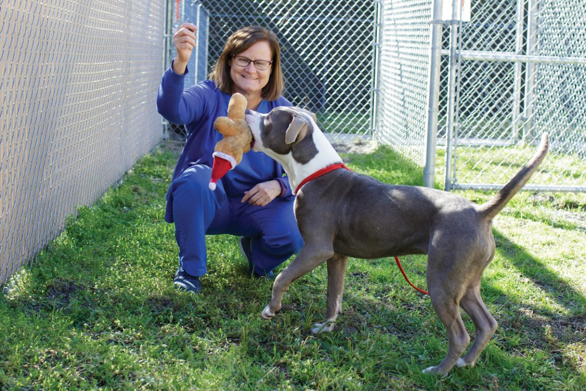 pit bull playing with Julie Levy, UF Vet Med researcher