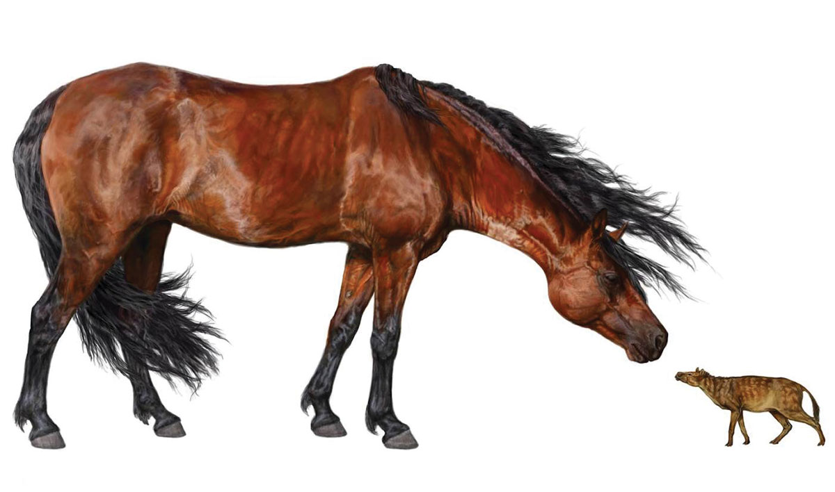 The early ancestors of modern horses were much smaller during the PETM.