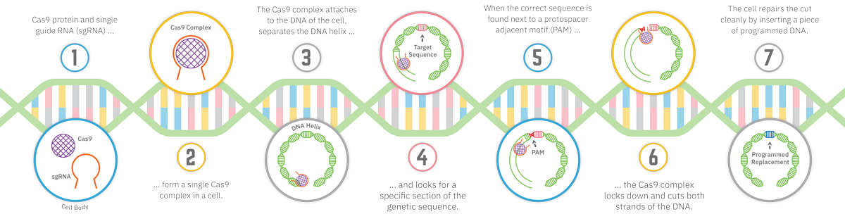 CRISPR Cas9 System: How It Works
