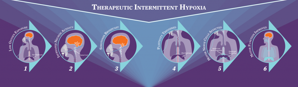 Infographic depicting the mechanics of Therapeutic Intermittent Hypoxia
