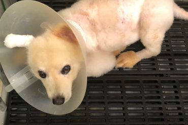 Dog treated for rare infection