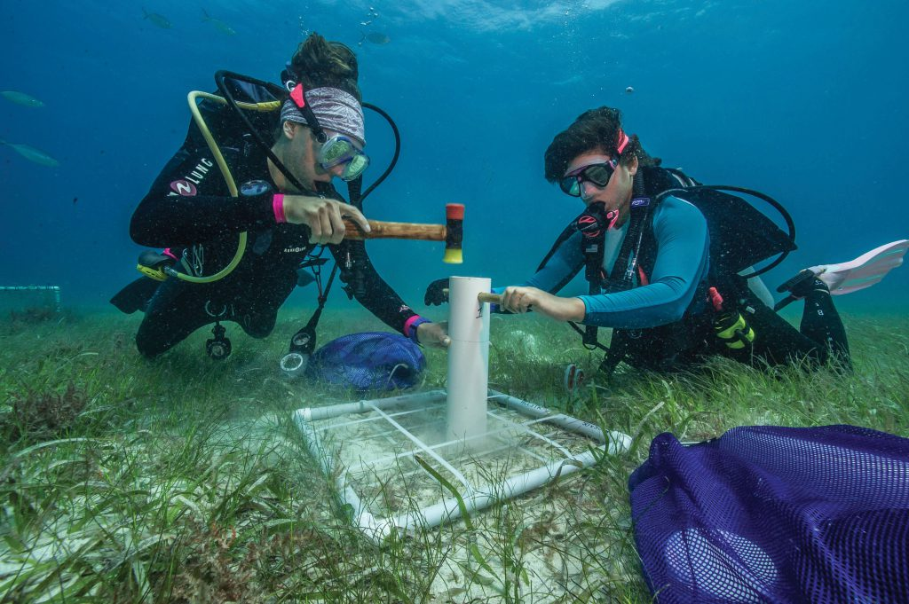 Alexandra Gulick, left, and Laura Palma study the effect of rebounding sea turtle populations on seagrass beds.