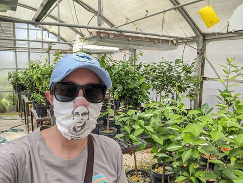 Lauren Diepenbrock wearing a mask to continue research inside greenhouse.