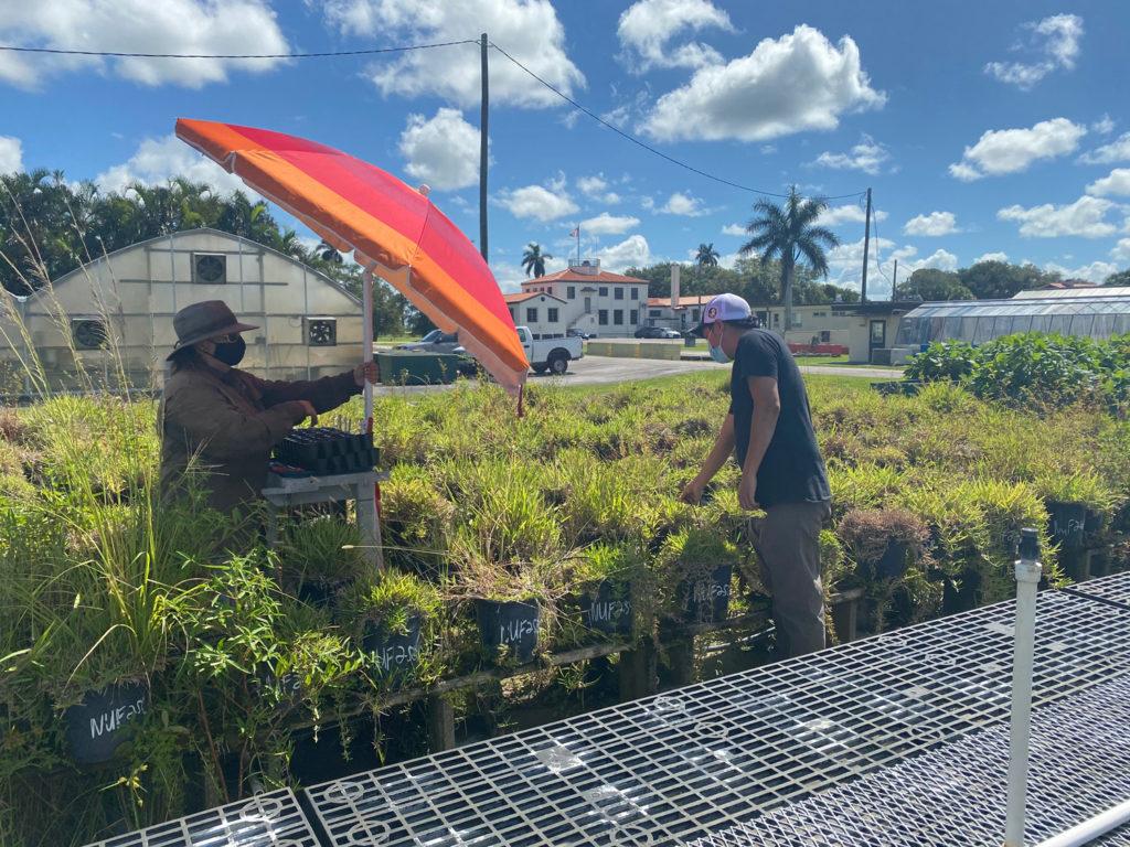 A biologist creates a makeshift outdoor lab using an umbrella and a cart.