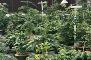 COVID-19 gardening