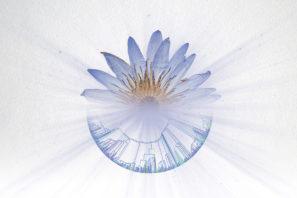 Photo-illustration for UF Biodiversity Institute feature image