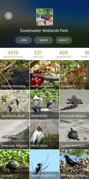 Screenshot of iNaturalist app