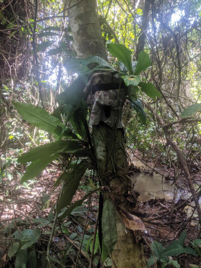 Image of a camera trap in Gabon
